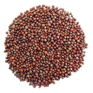 Семена от броколи за покълване